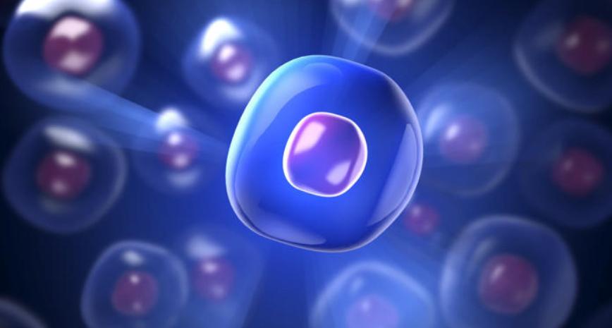 生きた幹細胞のイメージ