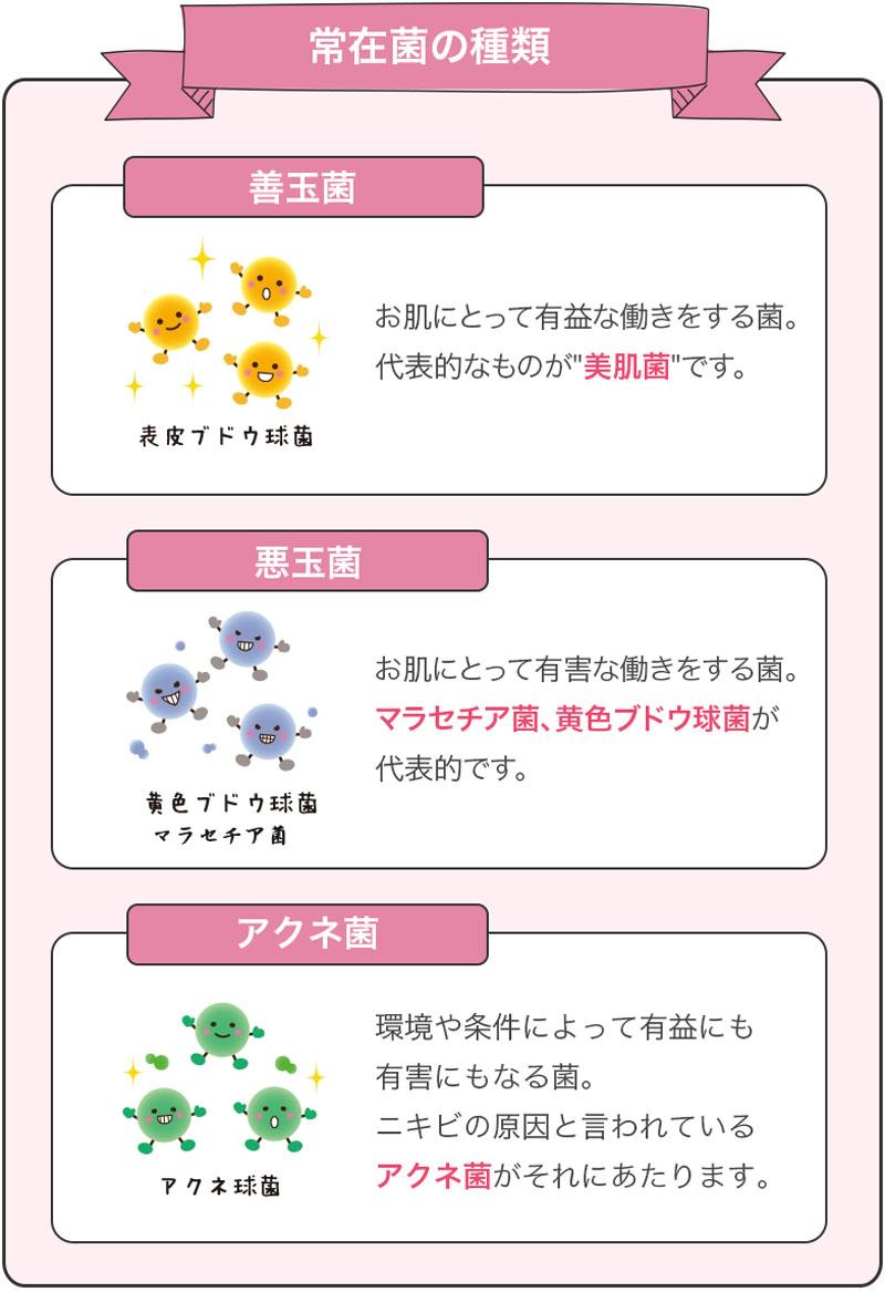 3種類の菌の詳細